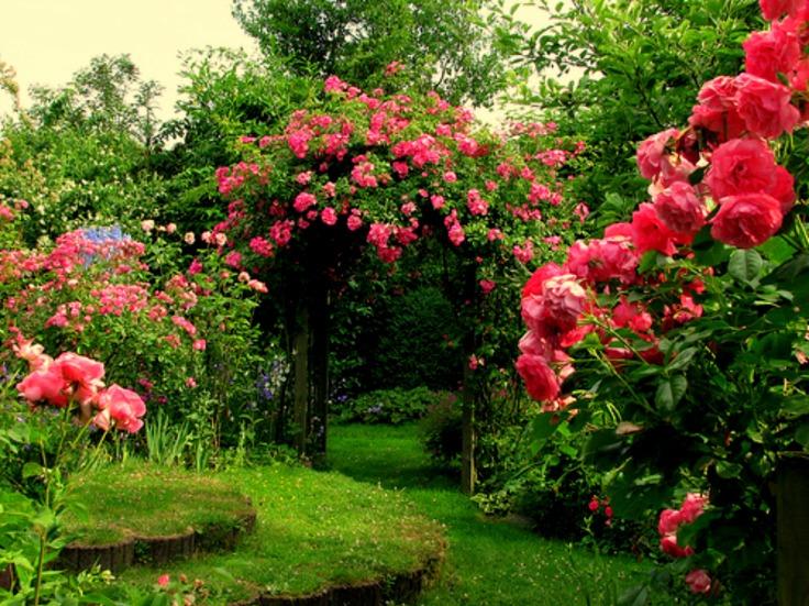 rose-flower-garden3